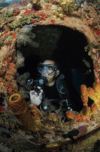 porthole of Franjack wreck, Cousteau reserve, Guadeloupe