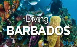 diving Barbados video