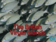 diving British Virgin Islands video video