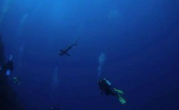 diving Turks and Caicos Islands video