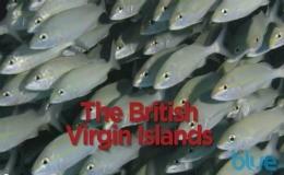 diving British Virgin Islands video