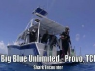 diving Turks and Caicos, shark encounter, Provo, Providenciales
