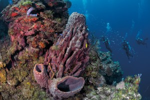 The Pinnacle, Guanaja, Bay Islands, Honduras, diving, barrel sponge, Solomon Baksh