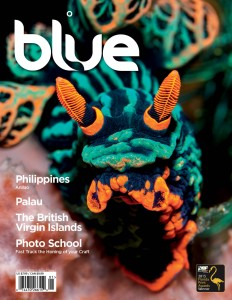 Blue magazine, Nembrotha kubaryana, Anilao,Philippines,Palau, The British Virgin Islands
