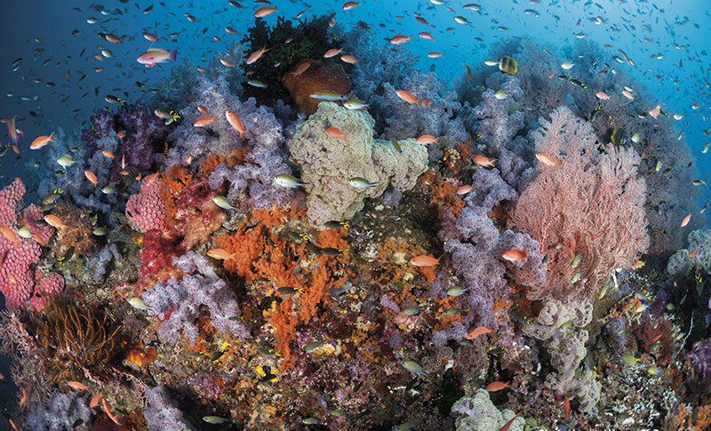 Raja Ampat, Indonesia, dive site
