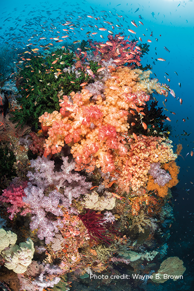 Reefscape in Raja Ampat,