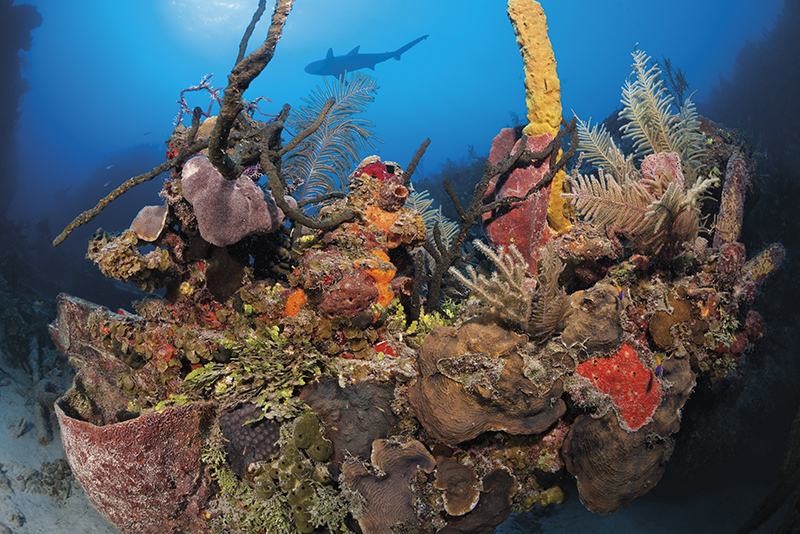 Cuba diving, Five Seas, Jardines de la Reina, Solomon Baksh, Blue magazine