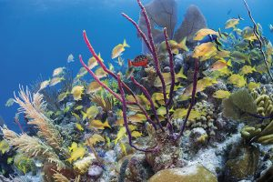 Cuba diving, Jardines de la Reina archipelago, Cueva del Pulpo, Solomon Baksh, Blue magazine, Aggressor Fleet