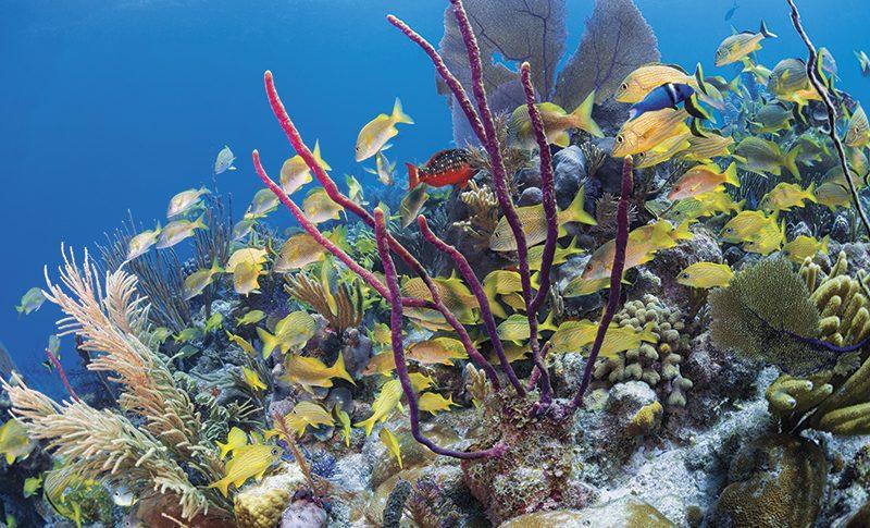Cuba diving, Jardines de la Reina archipelago, Cueva del Pulpo, Solomon Baksh, Blue magazine