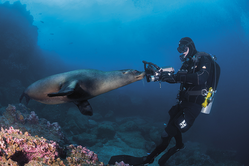 diving Galápagos Islands, Galápagos sea lion, Zalophus wollebaeki, Solomon Baksh, Blue magazine
