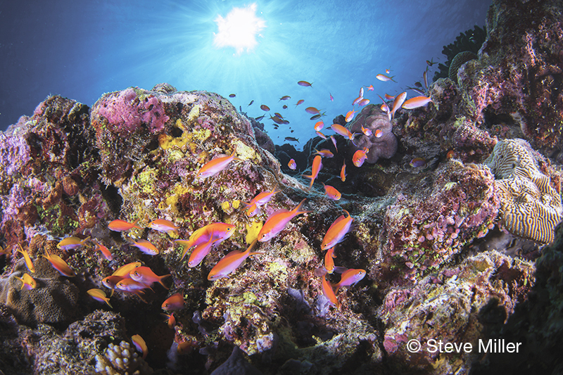 Steve Miller, Lessons in Light, Blue magazine, colors of the rainbow, underwater photography, ROY G. BIV